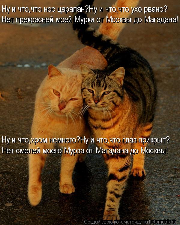 Котоматрица: Ну и что,что нос царапан?Ну и что,что ухо рвано? Нет прекрасней моей Мурки от Москвы до Магадана! Ну и что,хром немного?Ну и что,что глаз прикр