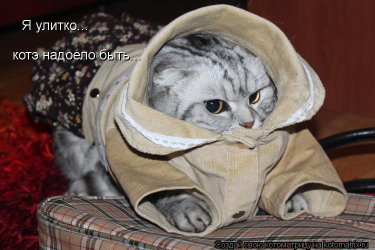 Котоматрица: Я улитко... котэ надоело быть...