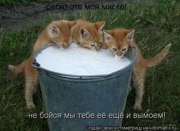 Котоматрица: -ребят это моя миска! -не бойся мы тебе её ещё и вымоем!