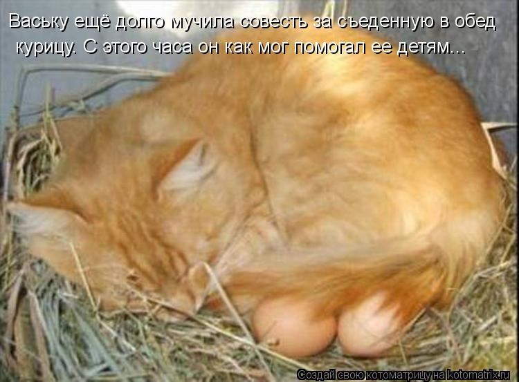 Котоматрица: Ваську ещё долго мучила совесть за съеденную в обед   курицу. С этого часа он как мог помогал ее детям...