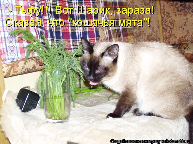 """Котоматрица: Сказал, что """"кошачья мята""""! - Тьфу!!! Вот Шарик, зараза!"""