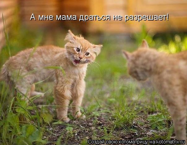 Котоматрица: А мне мама драться не разрешает!