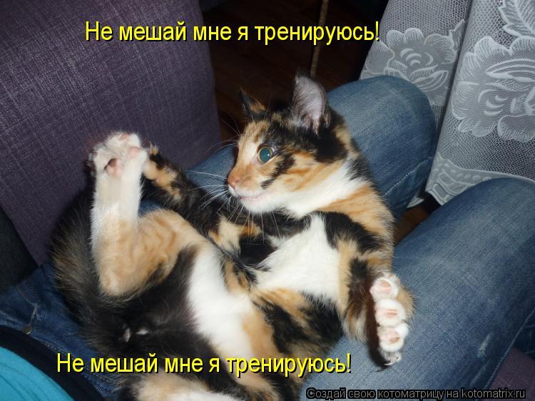 Котоматрица: Не мешай мне я тренируюсь! Не мешай мне я тренируюсь!