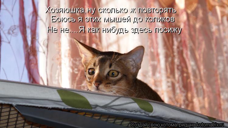 Котоматрица: Хозяюшка,ну сколько ж повторять Боюсь я этих мышей до коликов Не не....Я как нибудь здесь посижу