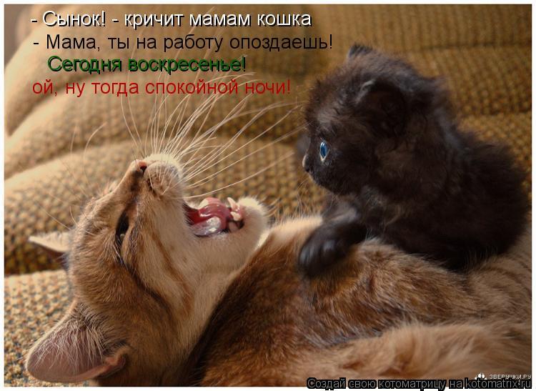 Котоматрица: - Сынок! - кричит мамам кошка - Мама, ты на работу опоздаешь! Сегодня воскресенье! ой, ну тогда спокойной ночи!