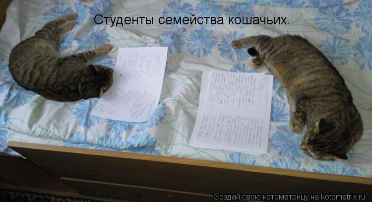 Котоматрица: Студенты семейства кошачьих.