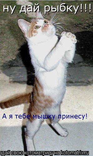 Котоматрица: ну дай рыбку!!! А я тебе мышку принесу!