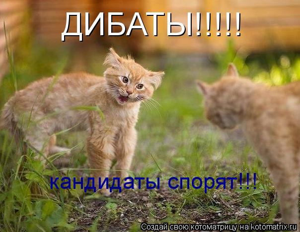 Котоматрица: ДИБАТЫ!!!!! кандидаты спорят!!!