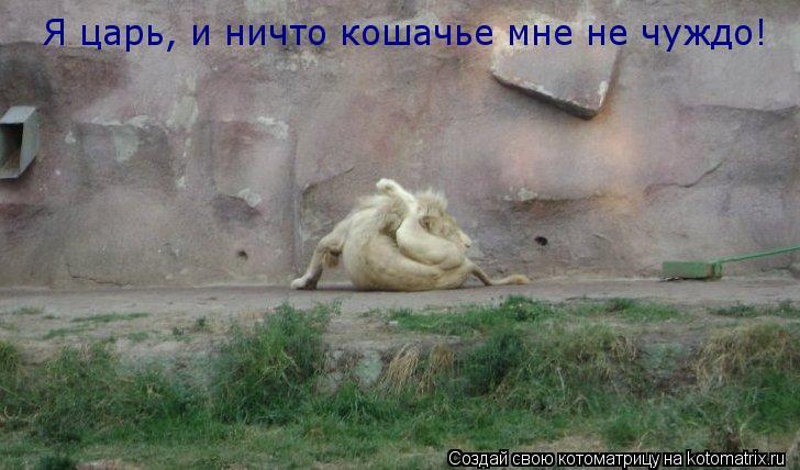 Котоматрица: Я царь, и ничто кошачье мне не чуждо!