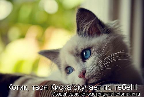 Котоматрица: Котик, твоя Киска скучает по тебе!!!