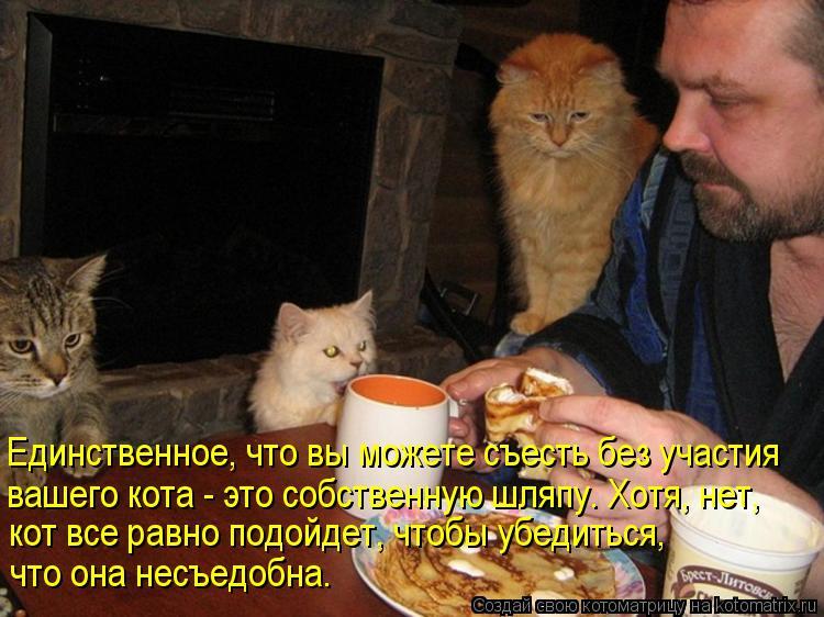 Котоматрица: Единственное, что вы можете съесть без участия вашего кота - это собственную шляпу. Хотя, нет, кот все равно подойдет, чтобы убедиться,  что о