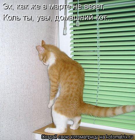Котоматрица: Эх, как же в марте не везет,  Коль ты, увы, домашний кот...