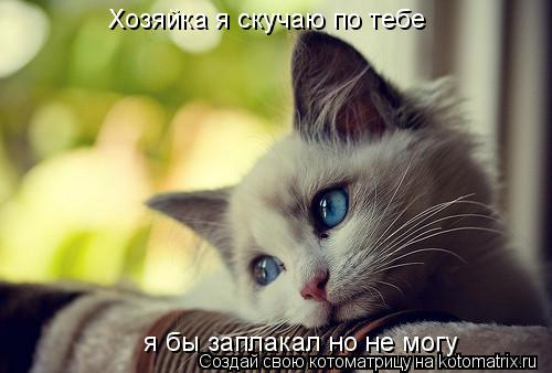 Котоматрица: Хозяйка я скучаю по тебе  я бы заплакал но не могу