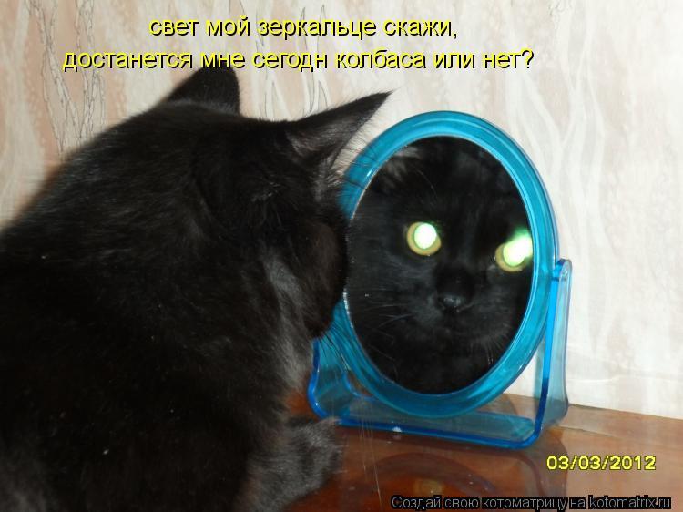 Котоматрица: свет мой зеркальце скажи, достанется мне сегодн колбаса или нет?