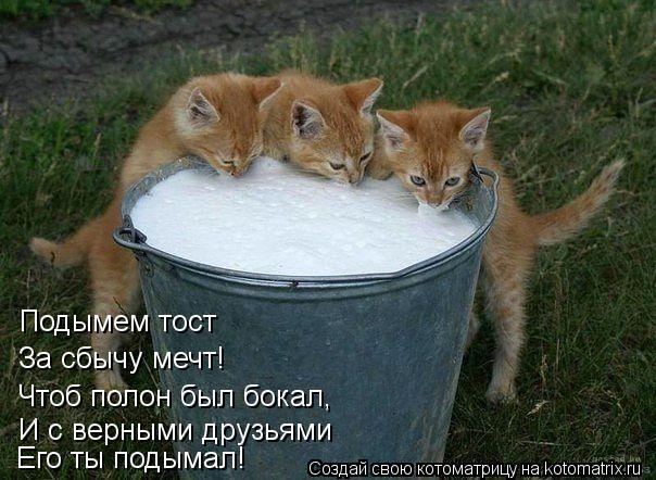 Котоматрица: Подымем тост За сбычу мечт! Чтоб полон был бокал, И с верными друзьями Его ты подымал!