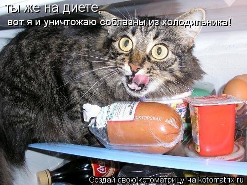 Котоматрица: ты же на диете,  вот я и уничтожаю соблазны из холодильника!