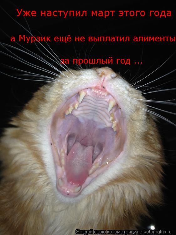 Котоматрица: Уже наступил март этого года  а Мурзик ещё не выплатил алименты  за прошлый год ...
