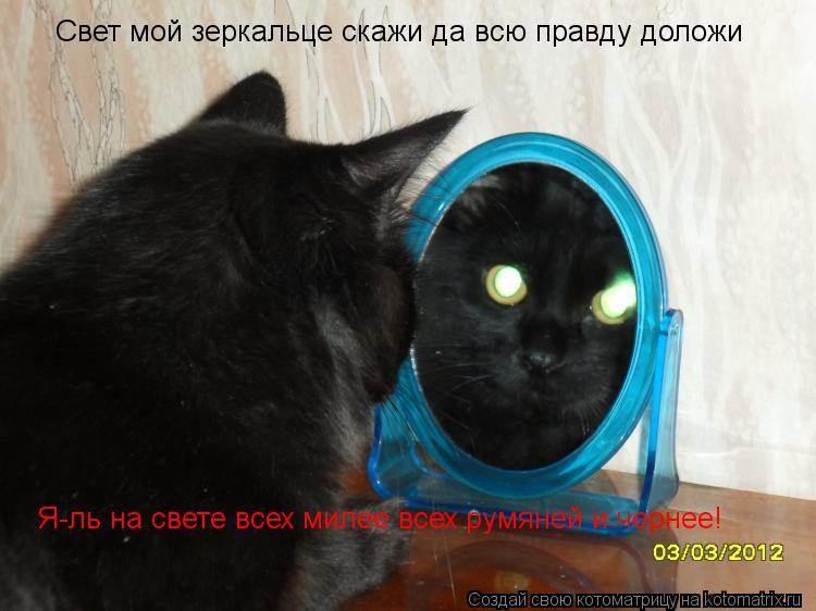 Котоматрица: Свет мой зеркальце скажи да всю правду доложи Я-ль на свете всех милее всех румяней и чернее!