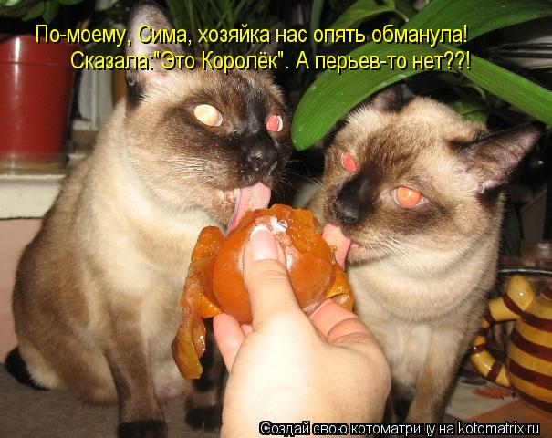 """Котоматрица: По-моему, Сима, хозяйка нас опять обманула!                                                   Сказала:""""Это Королёк"""". А перьев-то нет??!"""