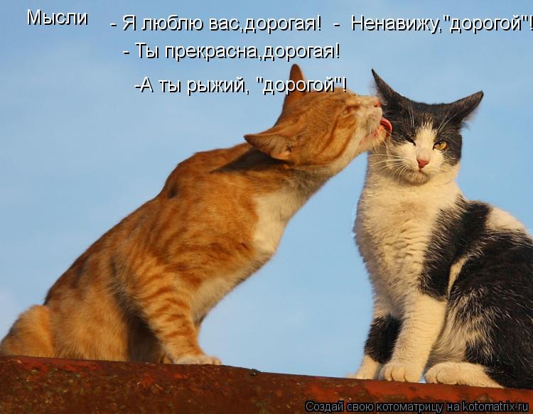 """Котоматрица: Мысли - Я люблю вас,дорогая!  -  Ненавижу,""""дорогой""""! - Ты прекрасна,дорогая! -А ты рыжий, """"дорогой""""!"""
