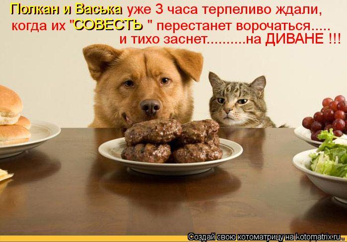 """Котоматрица: Полкан и Васька уже 3 часа терпеливо ждали, когда их """"СОВЕСТЬ """" перестанет ворочаться..... и тихо заснет..........на ДИВАНЕ !!! Полкан и Васька СОВЕС"""