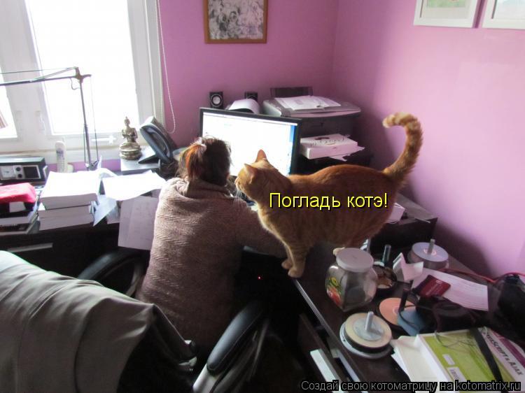 Котоматрица: Погладь котэ!