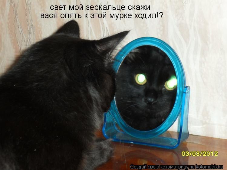 Котоматрица: свет мой зеркальце скажи вася опять к этой мурке ходил!?