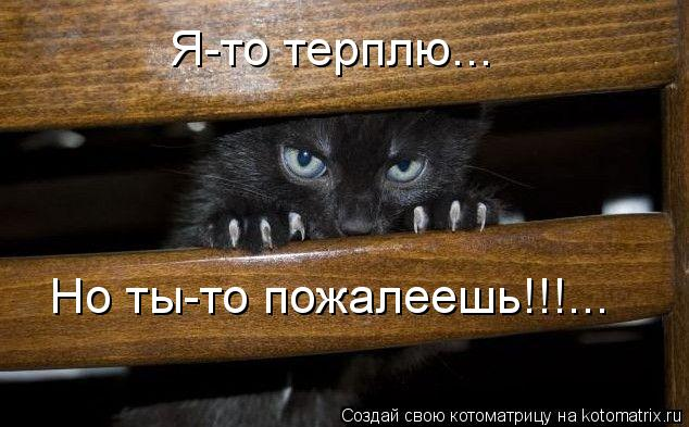 Котоматрица: Я-то терплю... Но ты-то пожалеешь!!!...