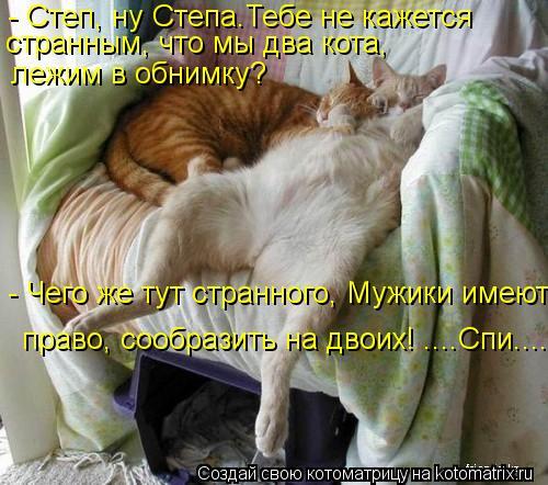 Котоматрица: - Степ, ну Степа.Тебе не кажется странным, что мы два кота, лежим в обнимку? - Чего же тут странного, Мужики имеют  право, сообразить на двоих! ...