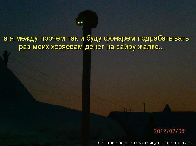 Котоматрица: а я между прочем так и буду фонарем подрабатывать раз моих хозяевам денег на сайру жалко...