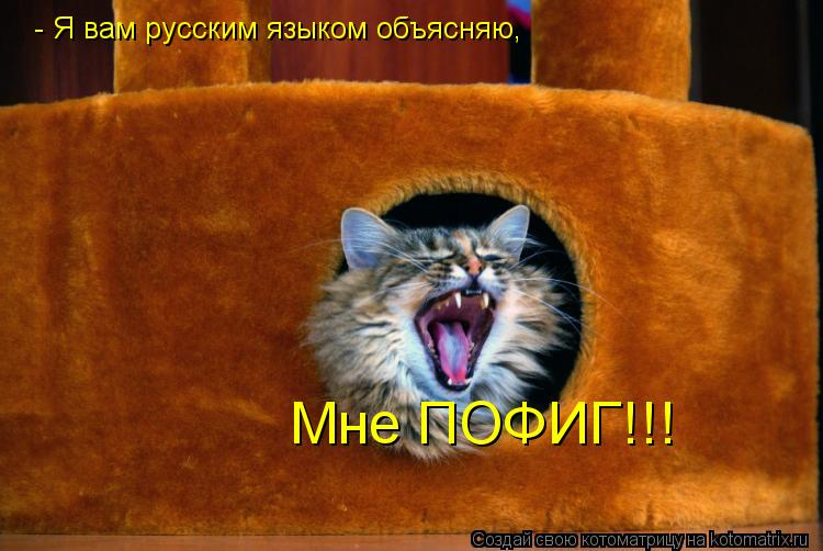 Котоматрица: - Я вам русским языком объясняю, Мне ПОФИГ!!!