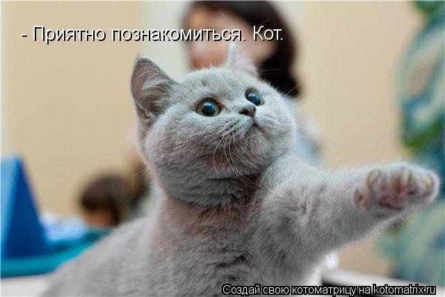 Котоматрица: - Приятно познакомиться. Кот.