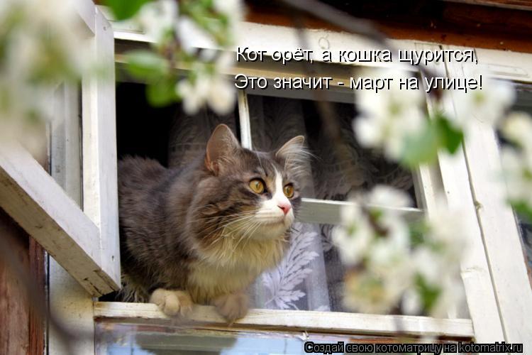 Котоматрица: Кот орёт, а кошка щурится, Это значит - март на улице!