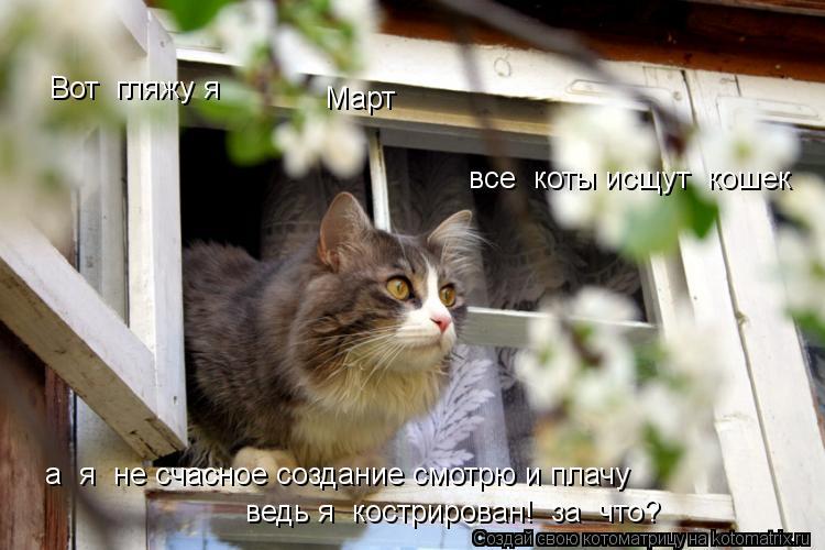 Котоматрица: Вот  гляжу я Март все  коты исщут  кошек а  я  не счасное создание смотрю и плачу ведь я  кострирован!  за  что?