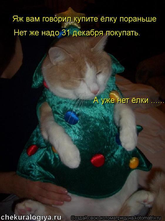 Котоматрица: Яж вам говорил купите ёлку пораньше Нет же надо 31 декабря покупать. А уже нет ёлки ......