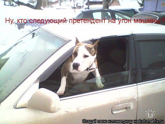 Котоматрица: Ну, кто следующий претендент на угон машины?