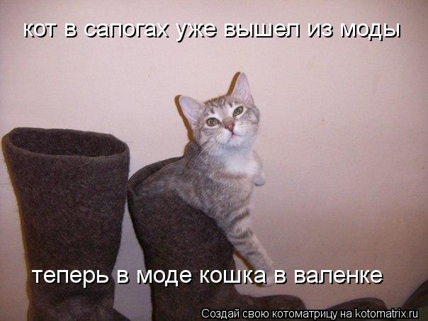 Котоматрица: кот в сапогах уже вышел из моды теперь в моде кошка в валенке