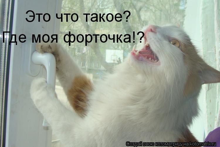 Котоматрица: Это что такое? Где моя форточка!?