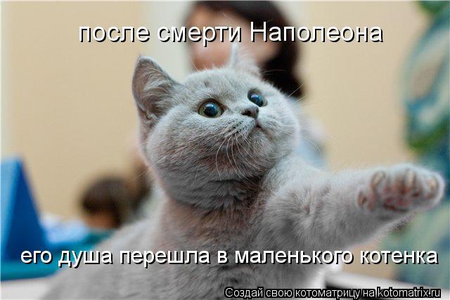 Котоматрица: после смерти Наполеона его душа перешла в маленького котенка