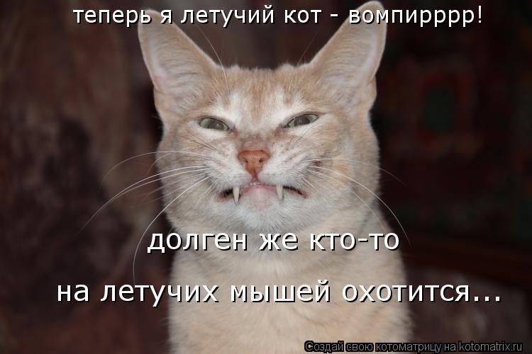 Котоматрица: теперь я летучий кот - вомпирррр! долген же кто-то на летучих мышей охотится...