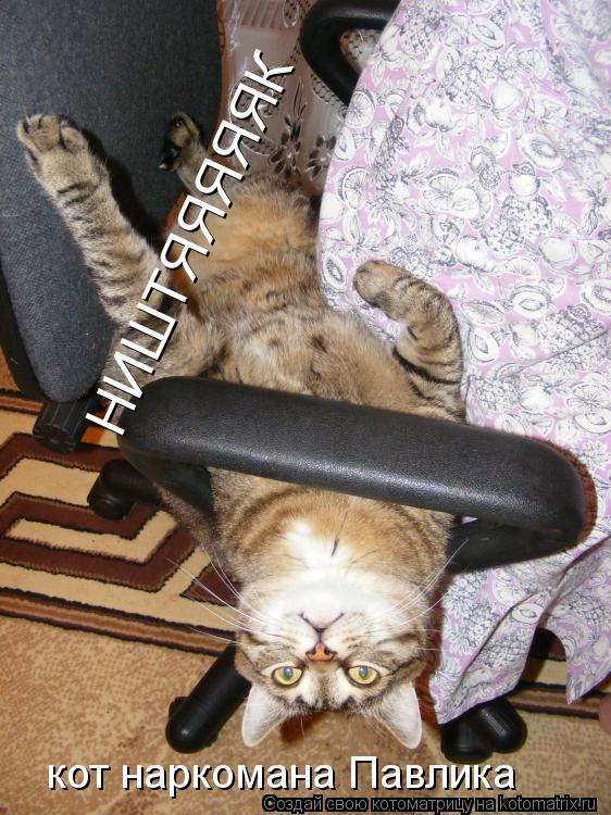 Котоматрица: НИШТЯЯЯЯЯК кот наркомана Павлика