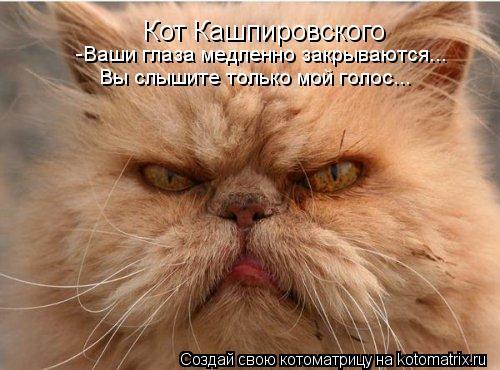 Котоматрица: Кот Кашпировского -Ваши глаза медленно закрываются... Вы слышите только мой голос...
