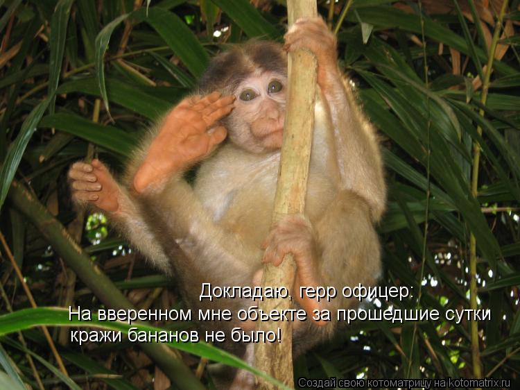 Котоматрица: Докладаю, герр офицер: На вверенном мне объекте за прошедшие сутки кражи бананов не было!