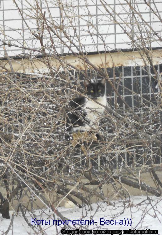 Котоматрица: Коты прилетели- Весна)))