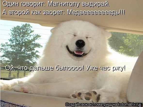 Котоматрица: Один говорит: Магнитолу выдирай. А второй как заорет: Медвеееееееедь!!! Ой, что дальше былоооо! Уже час ржу!