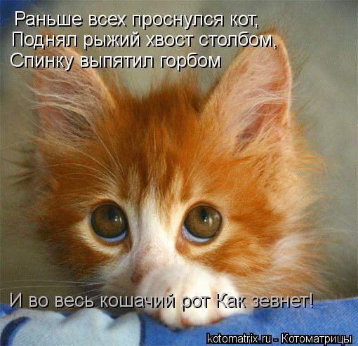 Котоматрица: Раньше всех проснулся кот, Поднял рыжий хвост столбом, Спинку выпятил горбом И во весь кошачий рот Как зевнет!