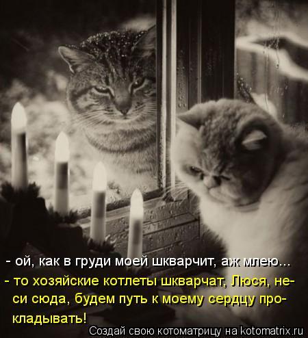 Котоматрица: - ой, как в груди моей шкварчит, аж млею... - то хозяйские котлеты шкварчат, Люся, не- си сюда, будем путь к моему сердцу про-  кладывать!