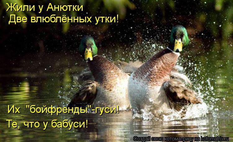 """Котоматрица: Жили у Анютки  Две влюблённых утки! Те, что у бабуси! Их  """"бойфренды""""-гуси!"""