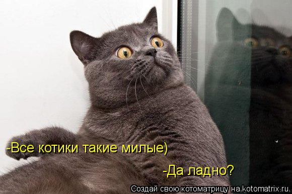 Котоматрица: -Все котики такие милые) -Все котики такие милые) -Да ладно?