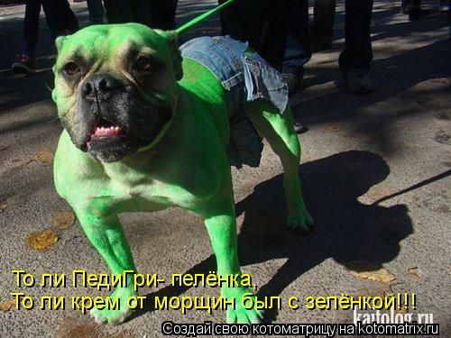 Котоматрица: То ли ПедиГри- пелёнка, То ли крем от морщин был с зелёнкой!!!